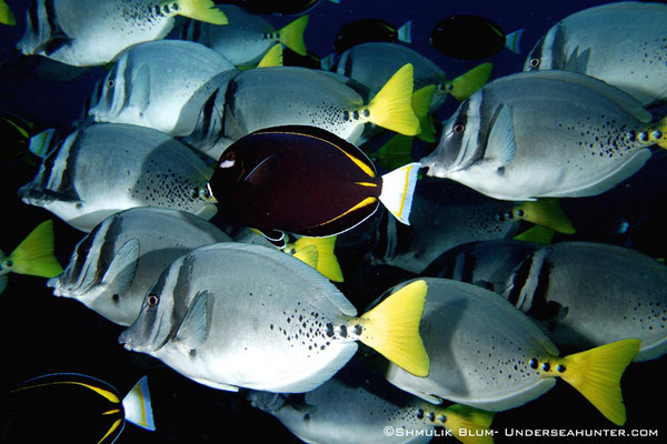 Fischschwarm in Cocos, ©Underseahunter Group
