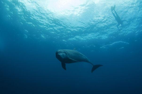 Galapagos Shark Diving - Delfin und Schnorchler