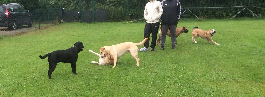 Mensch und Hund kann währen der Spielstunde Sozialkontakte pflegen und Freundscahften aufbauen