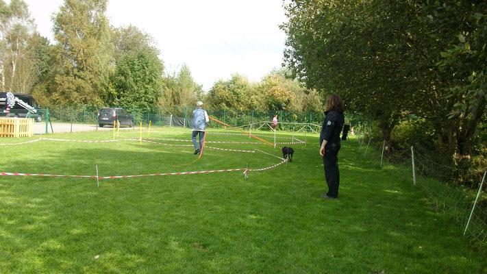 Das Ziel beim Longieren ist der gemeinsame Spass an der Kreisarbeit.