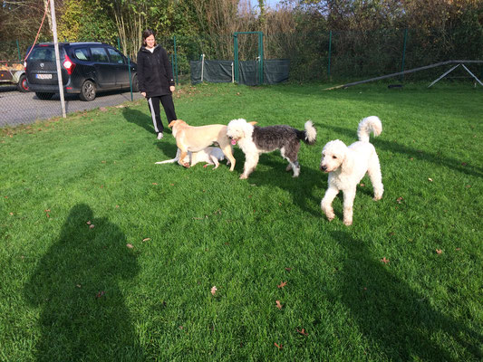 In der Spielstunde pflegen die Hunde Sozialkontakte.