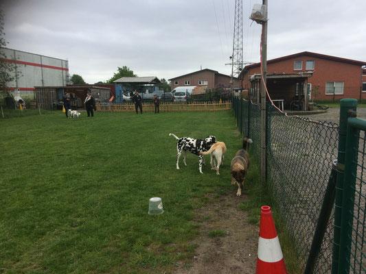 Hunde in unserer Spielstunde