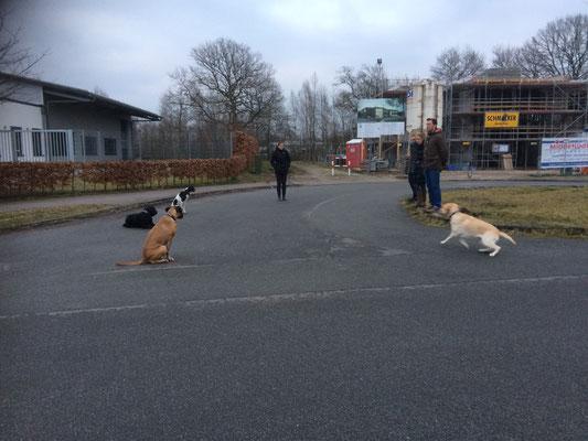 Training an der Strasse
