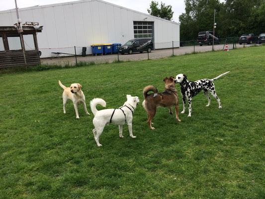 die Spielstunde der Hundeschule Famileien Tiere  in Oldenburg