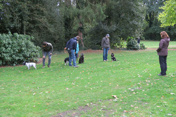 Die Hunde lernen auch im Park ruhig zu warten.