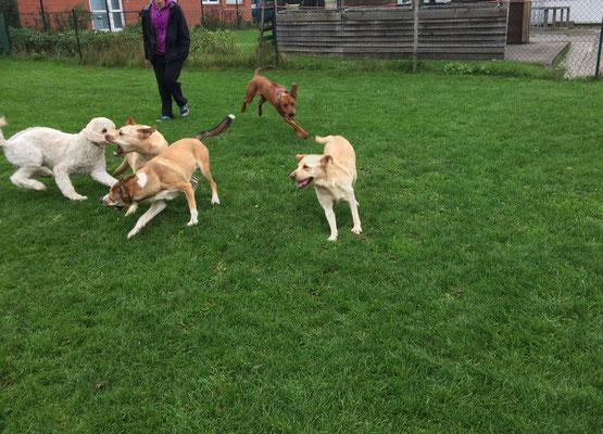 Die Hunde finden sich zu einem Spiel zusammen.