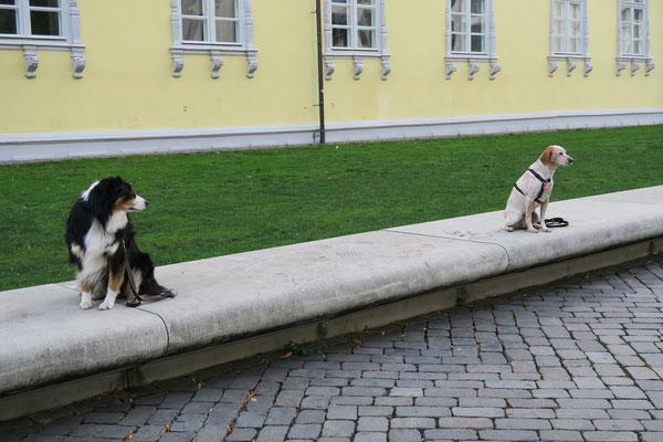Diese Hunde können auch in der Innenstadt ruhig abwarten.