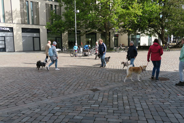 Leinenführigkeit ist ein wichtiger Teil des Hundetrainings.