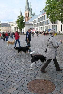 Hier üben Hund und Mensch zusammen durch die Innenstadt zu laufen.