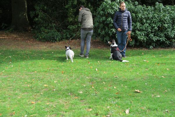 Leinenführigkeit und Abwarten sind wichtige Aufgaben für Hund und Halter.