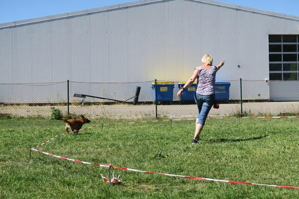 Lauffreudige Hunde kommen beim Longieren ganz auf ihre Kosten.