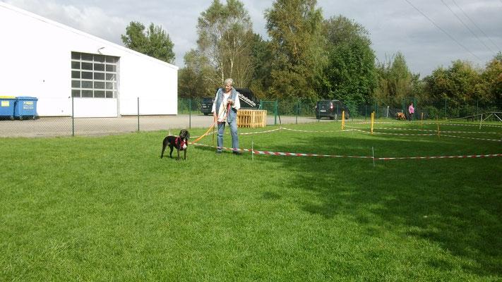 BeimLongieren wird der Hund zunächst an der Schleppleine an den Kreis gewöhnt.