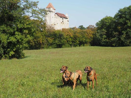 Noch ein letzter Schnappschuss vor der Burg Liechtenstein, bevor es zurück nach Hause geht...