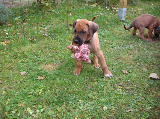 Kito, 6 Wochen jung