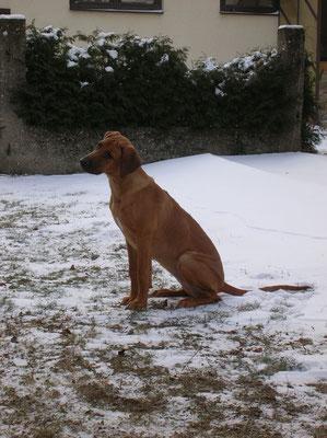 Malaika´s first snow, December 2009