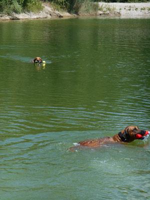 ...ein Seehund kommt selten allein...