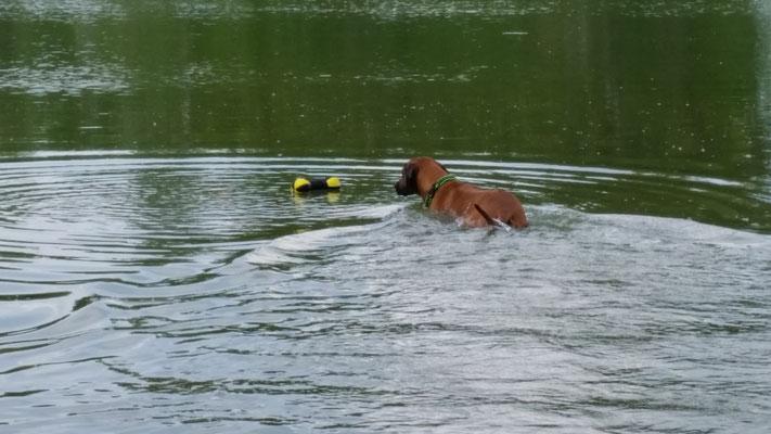 Kito stürzt sich auch wieder begeistert in die Fluten...