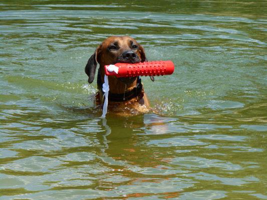 Kito apportiert gerne, ob am Land oder aus dem Wasser.