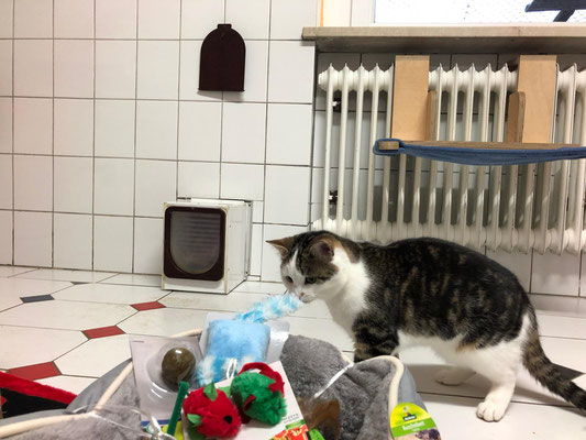 Katzenhilfe Straubing