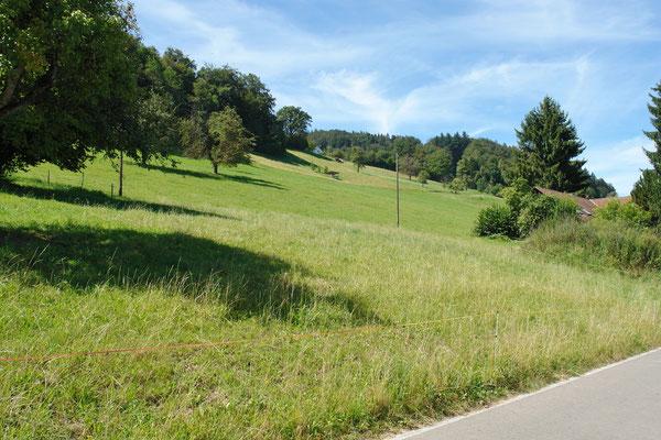 Gleich oberhalb der Oberdorfstrasse beginnt die Landwirtschaftszone.