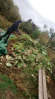 Die abgeernteten Bohnen- und Gurkenpflanzen zur Erzeugung neuer Biomasse