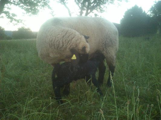 Molly und Filou direkt nach der Geburt