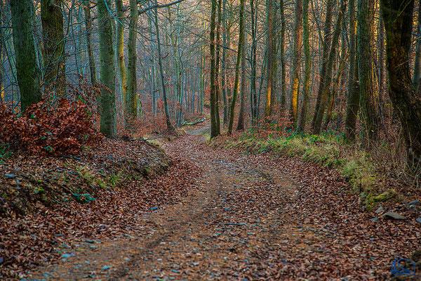 Wandern um Wernigerode