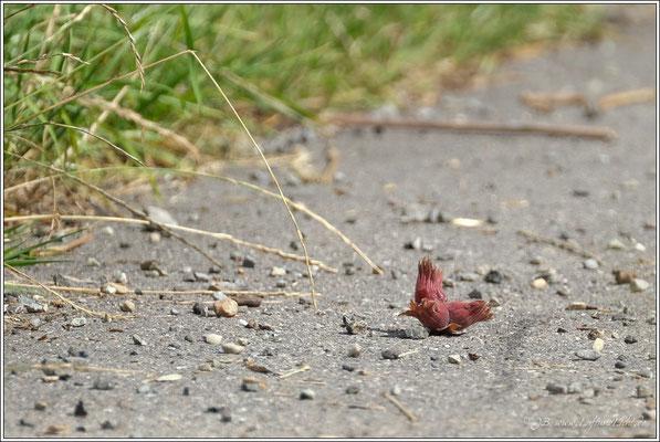 beim Sprung über den Weg verloren