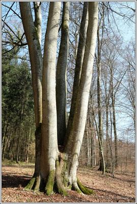 Viele Stämme geben auch einen Baum.