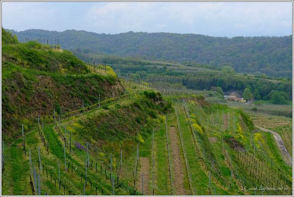 Lenzenberg hat heute zu, dann gehen wir halt durch die Weinberge hinunter zu den Martinshöfen, hier kann man auch sehr schön einkehren.
