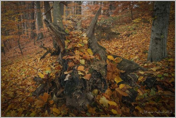 Die Waldgeister schlafen noch