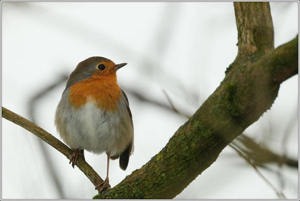 ein kleines freundliches Vögelein ...