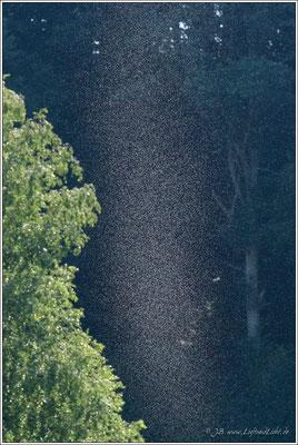 ein Mückenschwarm