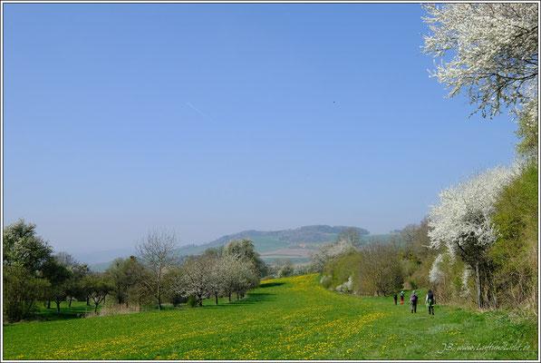 """Der """"Hohentwieler"""" führt auf wunderschönen Wegen durch die Hegaulandschaft."""