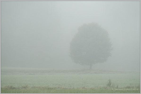 Im Nebel ruhet noch ...