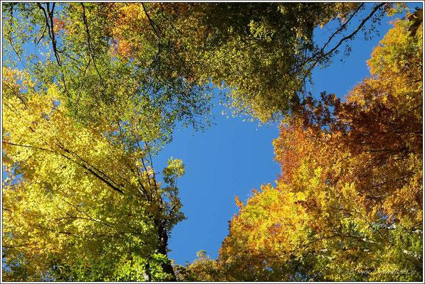 ... unter den leuchtenden Farben des Herbstes