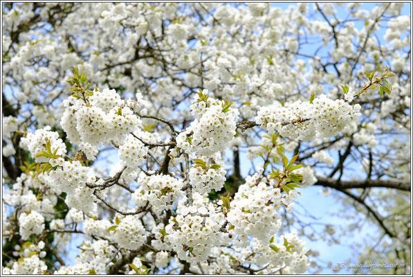 Blüten gibt's natürlich auch auf dem Blütenweg.