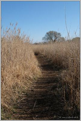 Denn von Mitte April bis September ist der Weg gesperrt, um die störungsfreie Brut und Jungenaufzucht der dort lebenden seltenen Vögel zu gewährleisten.