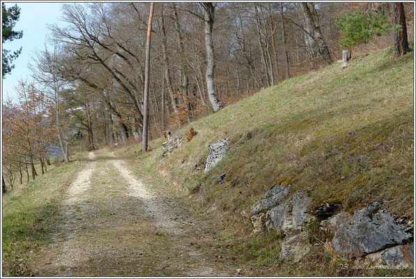 Eine kleine Runde durch das Naturschutzgebiet Schoren.