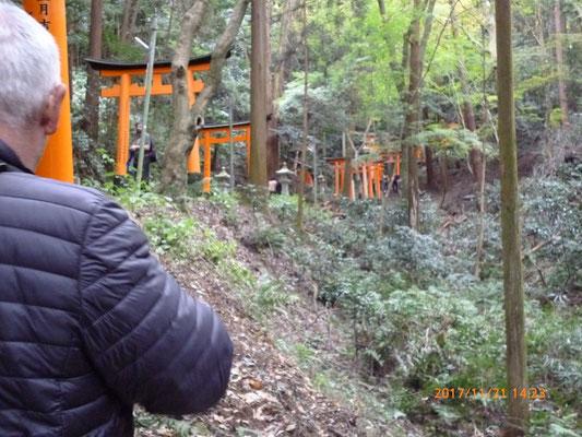 『伏見稲荷神社』 山の中に延々と参道が続きます。