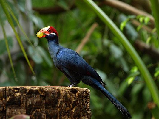 Exotischer Vogel im Tropenhaus Zoo Hellabrunn München