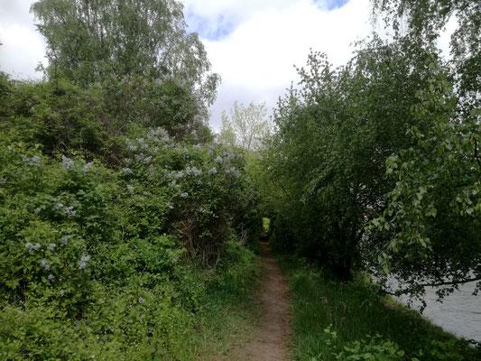 Uferweg am Teltowkanal