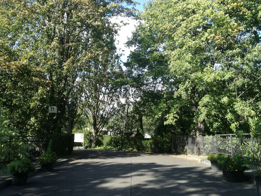 Friedhof Grunewald