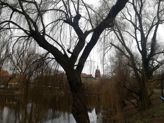 Kreuzpfuhl mit Blick zur Ruine Bethanienkirche - Berlin Weißensee