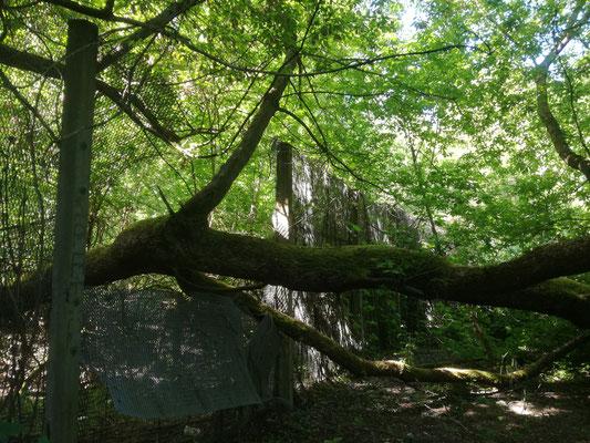 Mauerreste in der Nähe von Teltow