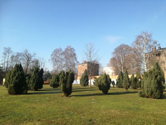 Wachholderbäume symbolisieren die Gefangenen im Geschichtspark Zellengefägnis Moabit