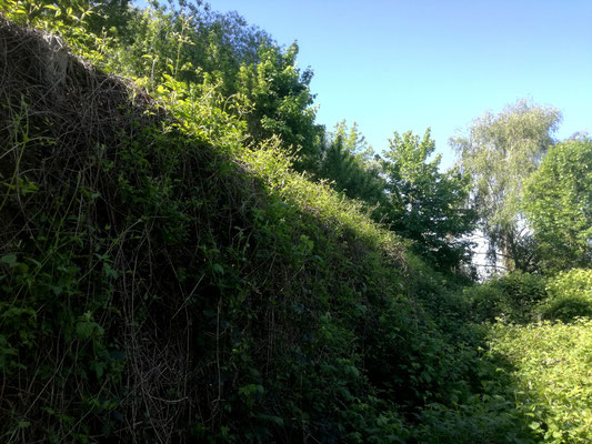 Mauerreste - Mauerweg / Teltowkanal
