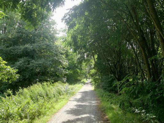 Pankeweg im Bereich der Karower Teiche