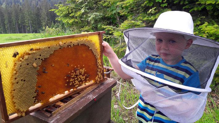 Ein fleißiger Helfer bei den fleißigen Bienen