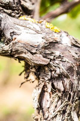 Weinbaufotografie im Rhein-Main-Gebiet